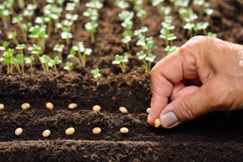 THE PRINCIPLE OF SOWING SEED