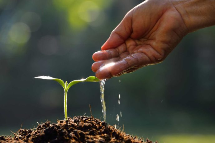 THE GROWING SEED